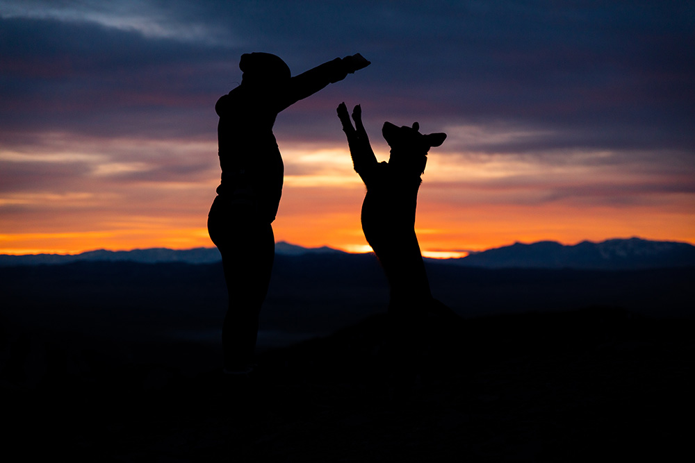 silhouette of a dog playing with its owner at sunset in the mountains